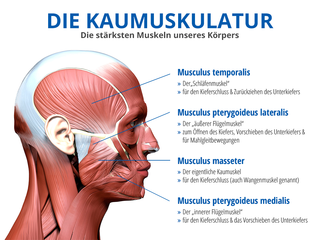 CMD (Craniomandibuläre Dysfunktion) - Was ist das eigentlich?